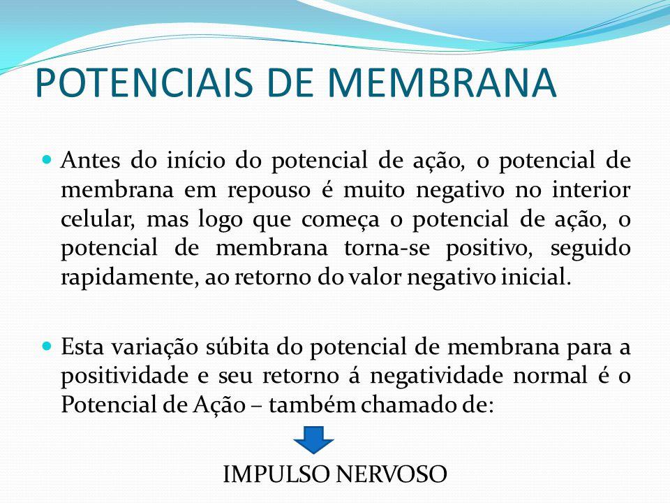 POTENCIAIS DE MEMBRANA Antes do início do potencial de ação, o potencial de membrana em repouso é muito negativo no interior celular, mas logo que com