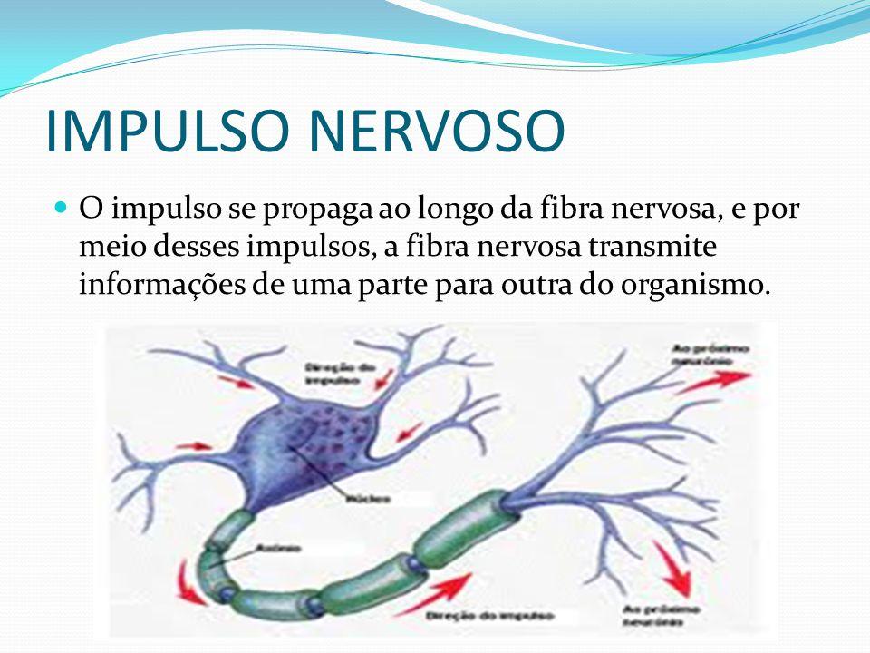 O impulso se propaga ao longo da fibra nervosa, e por meio desses impulsos, a fibra nervosa transmite informações de uma parte para outra do organismo
