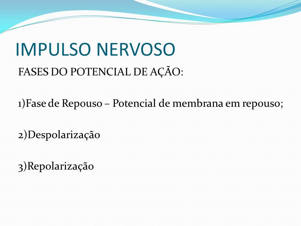 IMPULSO NERVOSO FASES DO POTENCIAL DE AÇÃO: 1)Fase de Repouso – Potencial de membrana em repouso; 2)Despolarização 3)Repolarização