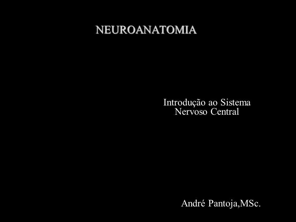 NEUROANATOMIA André Pantoja,MSc. Introdução ao Sistema Nervoso Central