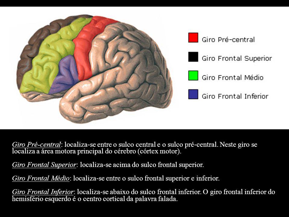 Giro Pré-central: localiza-se entre o sulco central e o sulco pré-central. Neste giro se localiza a área motora principal do cérebro (córtex motor). G