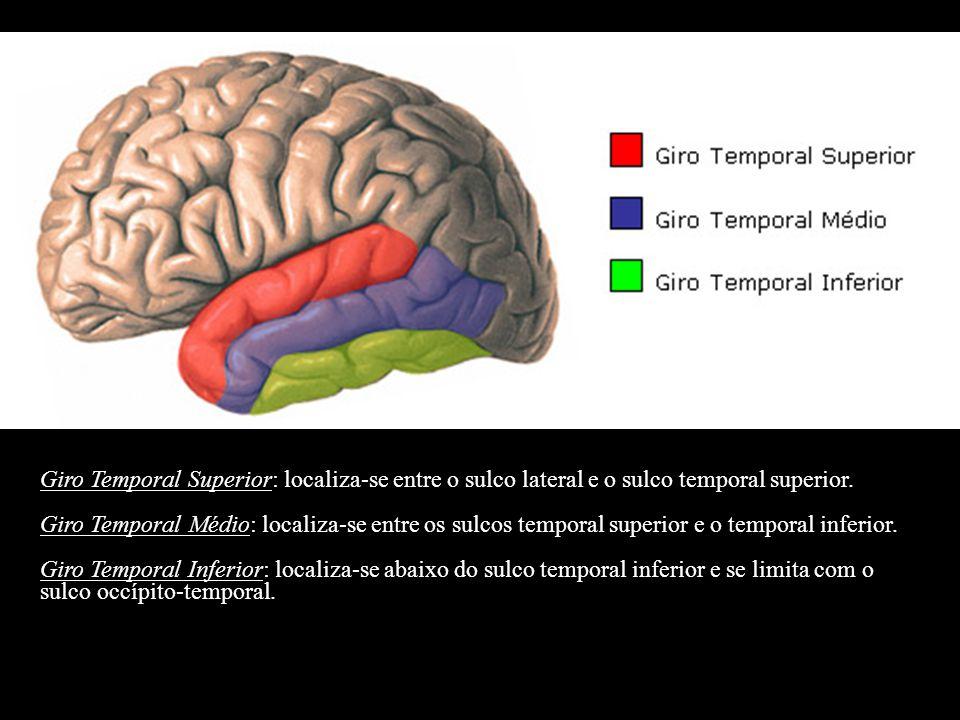 Giro Temporal Superior: localiza-se entre o sulco lateral e o sulco temporal superior. Giro Temporal Médio: localiza-se entre os sulcos temporal super