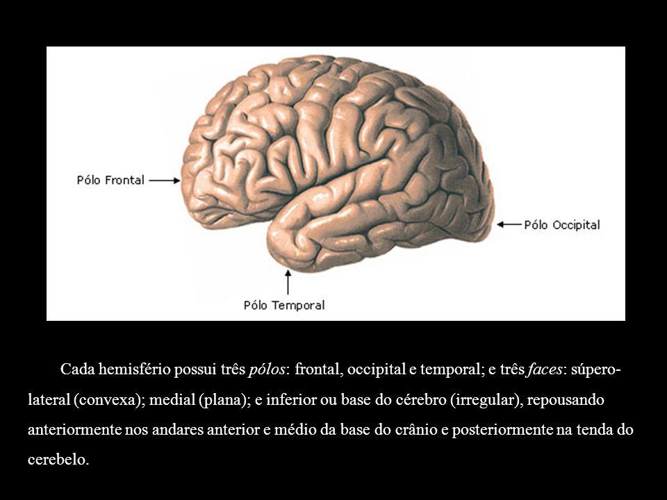 Lobo Parietal: Sulco Pós-central: localiza-se posteriormente ao giro pós-central.