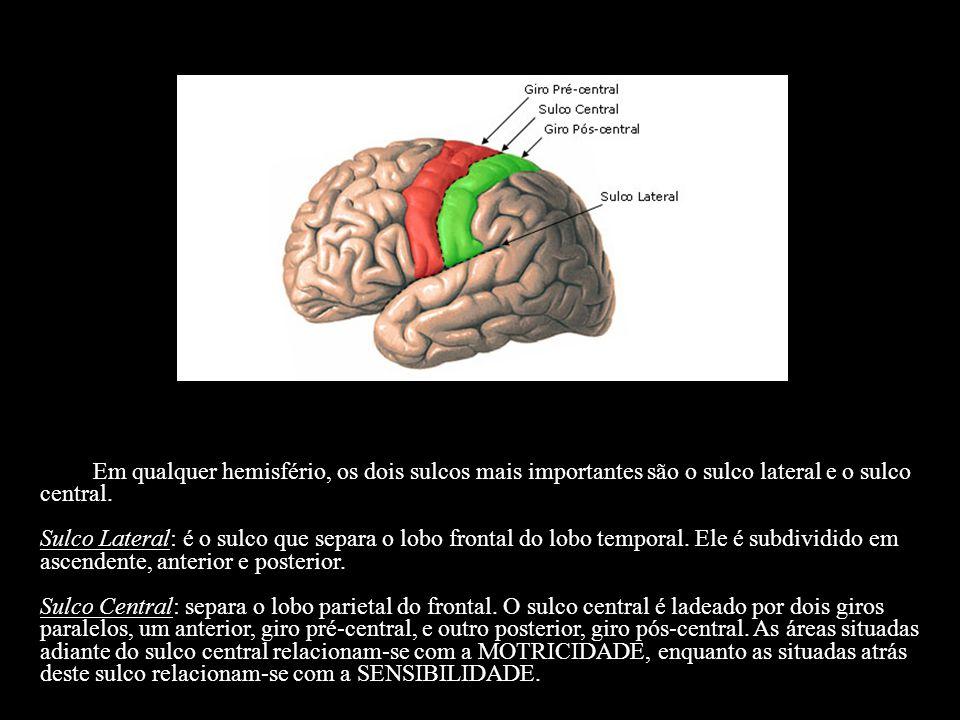 Em qualquer hemisfério, os dois sulcos mais importantes são o sulco lateral e o sulco central. Sulco Lateral: é o sulco que separa o lobo frontal do l