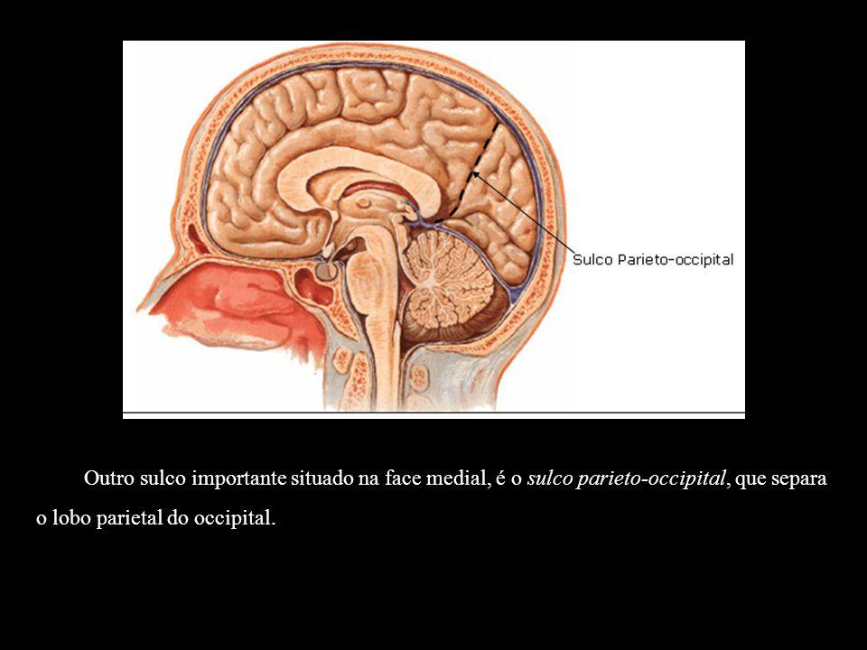 Outro sulco importante situado na face medial, é o sulco parieto-occipital, que separa o lobo parietal do occipital.