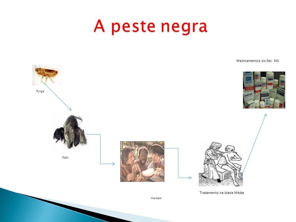Pulga Rato Homem Tratamento na Idade Média Medicamentos do Séc. XXi