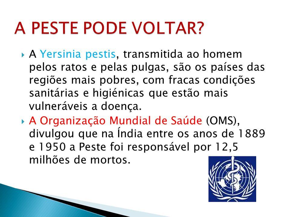 A Yersinia pestis, transmitida ao homem pelos ratos e pelas pulgas, são os países das regiões mais pobres, com fracas condições sanitárias e higiénica