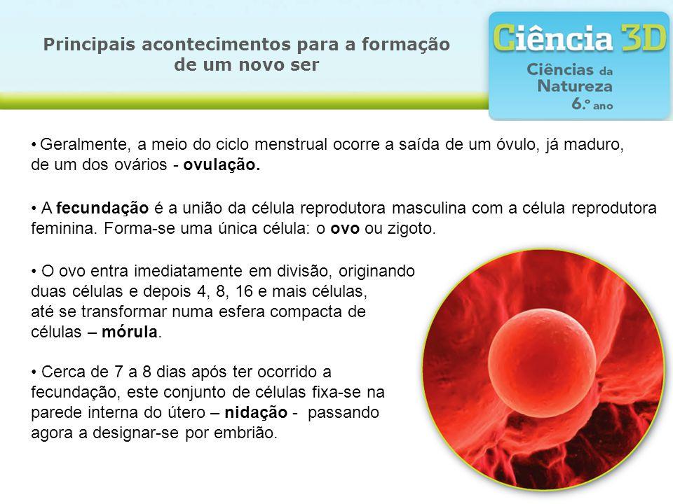Principais acontecimentos para a formação de um novo ser Geralmente, a meio do ciclo menstrual ocorre a saída de um óvulo, já maduro, de um dos ovário