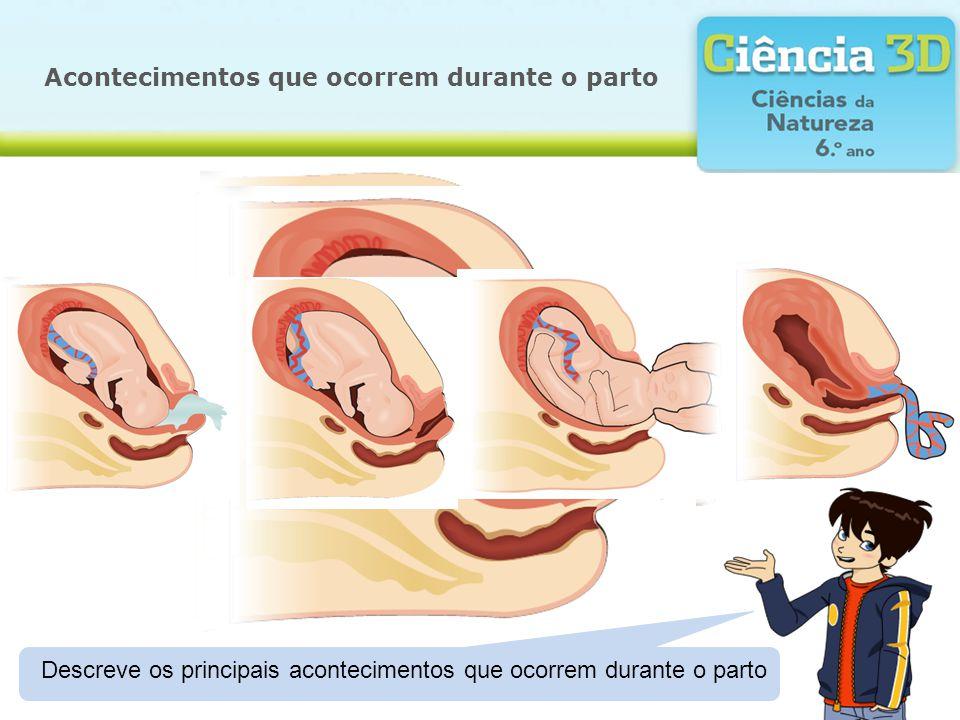Acontecimentos que ocorrem durante o parto Descreve os principais acontecimentos que ocorrem durante o parto
