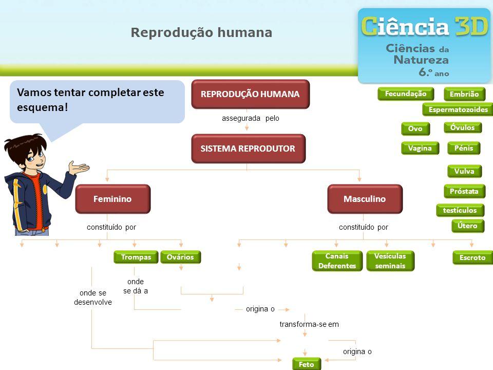 Reprodução humana Vamos tentar completar este esquema! constituído por assegurada pelo testículos Trompas Útero Canais Deferentes Vagina Ovários Óvulo
