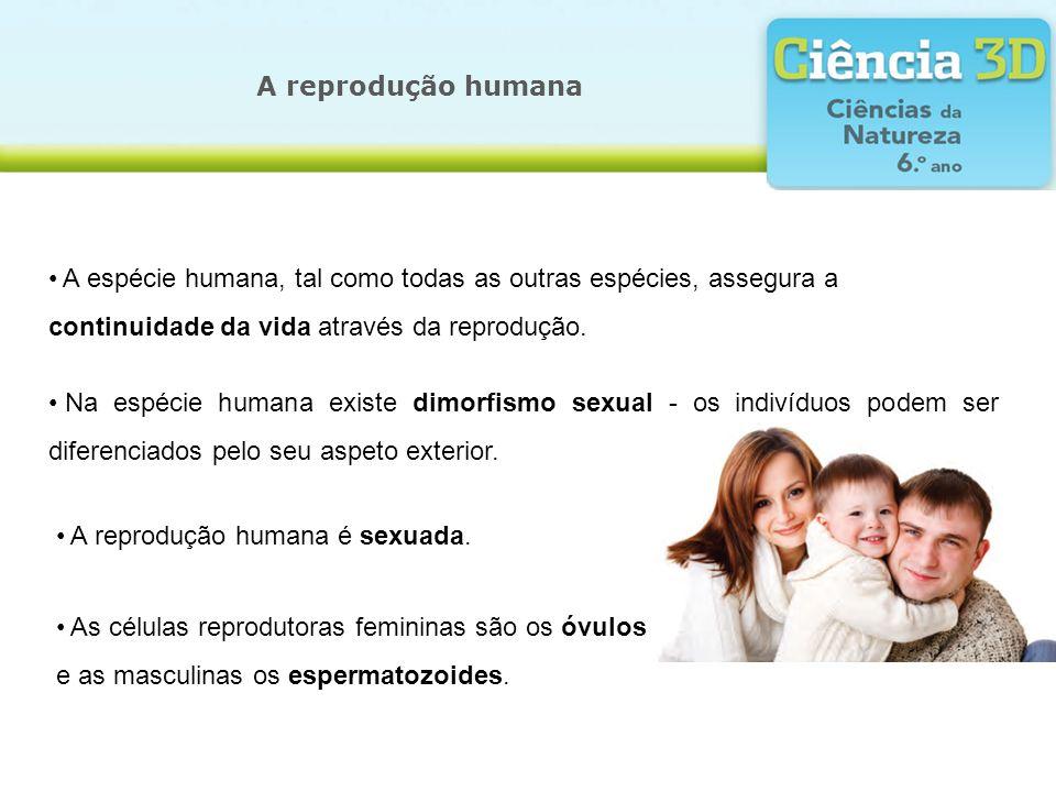 A reprodução humana A espécie humana, tal como todas as outras espécies, assegura a continuidade da vida através da reprodução. Na espécie humana exis