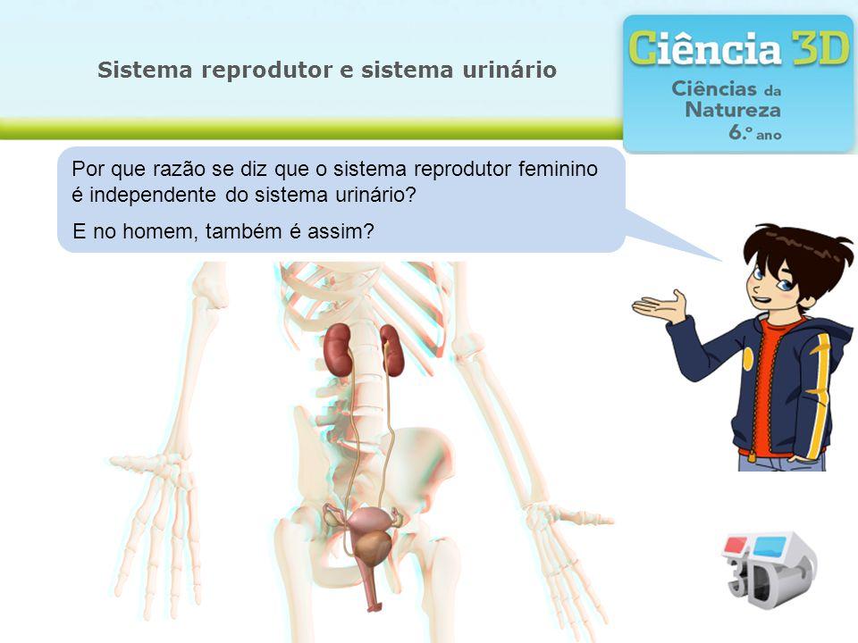 Sistema reprodutor e sistema urinário Por que razão se diz que o sistema reprodutor feminino é independente do sistema urinário? E no homem, também é