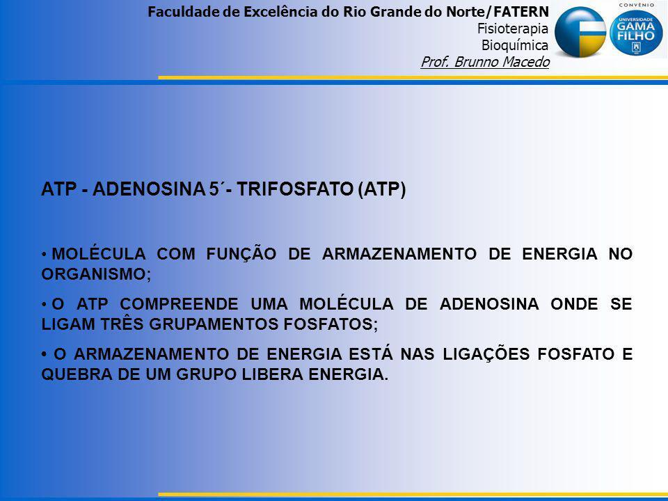 ATP - ADENOSINA 5´- TRIFOSFATO (ATP) MOLÉCULA COM FUNÇÃO DE ARMAZENAMENTO DE ENERGIA NO ORGANISMO; O ATP COMPREENDE UMA MOLÉCULA DE ADENOSINA ONDE SE