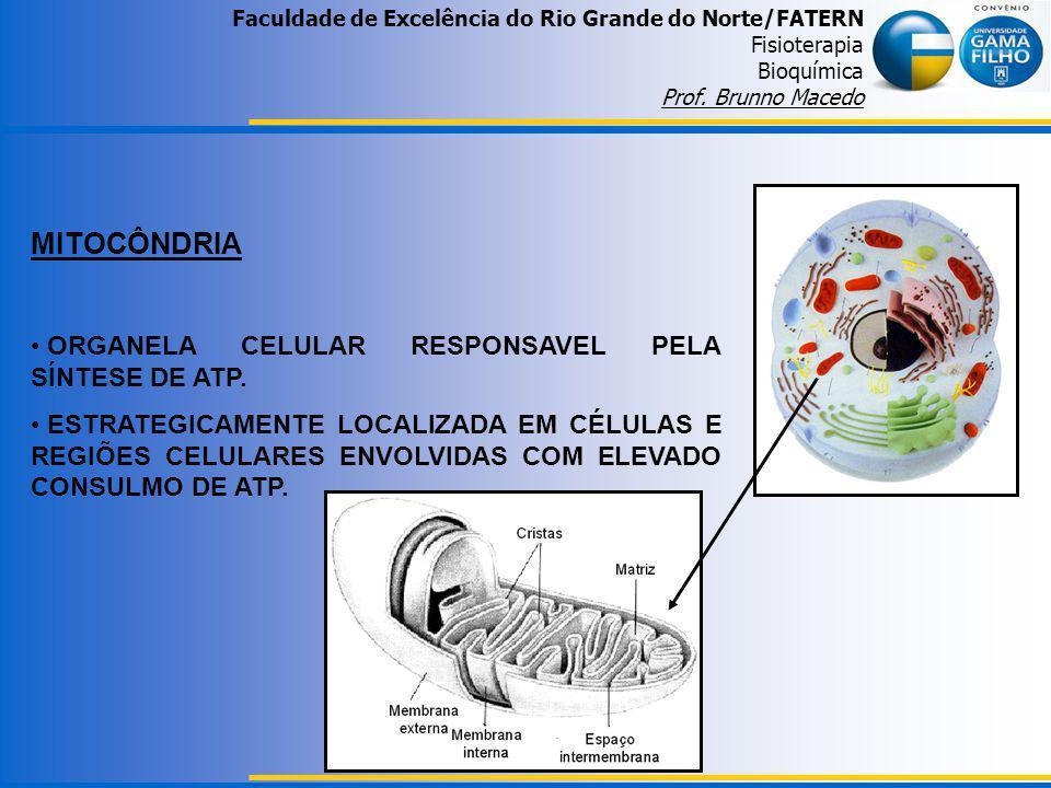 Faculdade de Excelência do Rio Grande do Norte/FATERN Fisioterapia Bioquímica Prof. Brunno Macedo MITOCÔNDRIA ORGANELA CELULAR RESPONSAVEL PELA SÍNTES