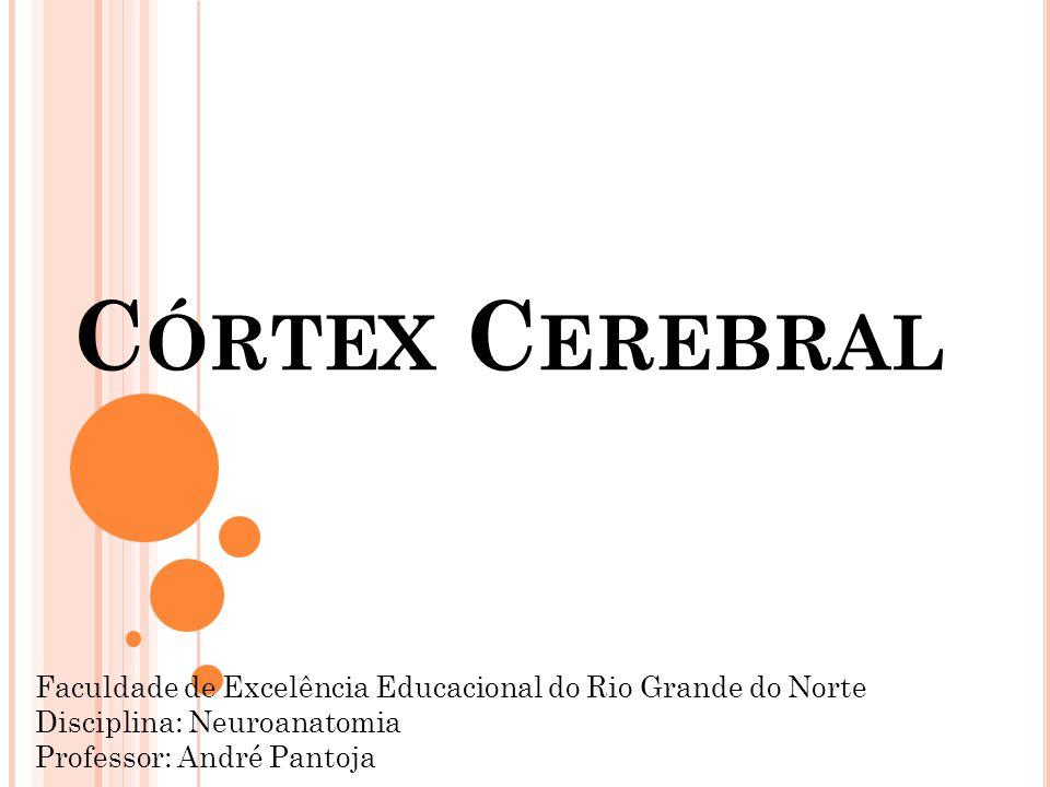 C ÓRTEX C EREBRAL Faculdade de Excelência Educacional do Rio Grande do Norte Disciplina: Neuroanatomia Professor: André Pantoja