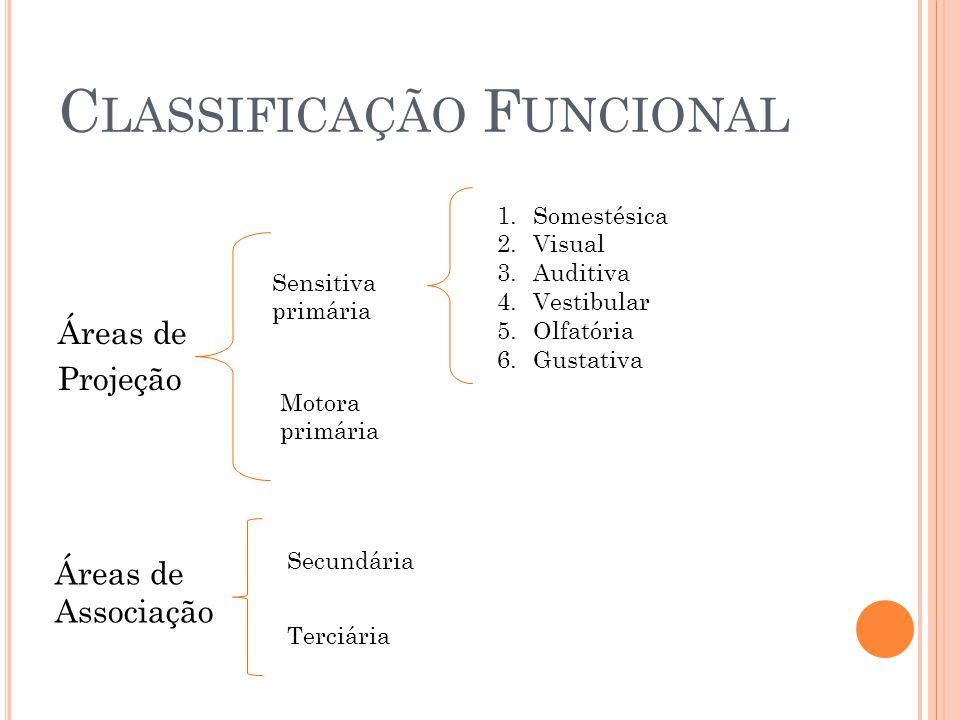 C LASSIFICAÇÃO F UNCIONAL Áreas de Projeção Sensitiva primária Motora primária 1.Somestésica 2.Visual 3.Auditiva 4.Vestibular 5.Olfatória 6.Gustativa Áreas de Associação Secundária Terciária