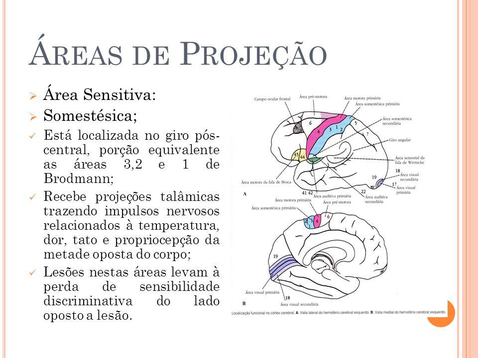 Á REAS DE P ROJEÇÃO Área Sensitiva: Somestésica; Está localizada no giro pós- central, porção equivalente as áreas 3,2 e 1 de Brodmann; Recebe projeções talâmicas trazendo impulsos nervosos relacionados à temperatura, dor, tato e propriocepção da metade oposta do corpo; Lesões nestas áreas levam à perda de sensibilidade discriminativa do lado oposto a lesão.