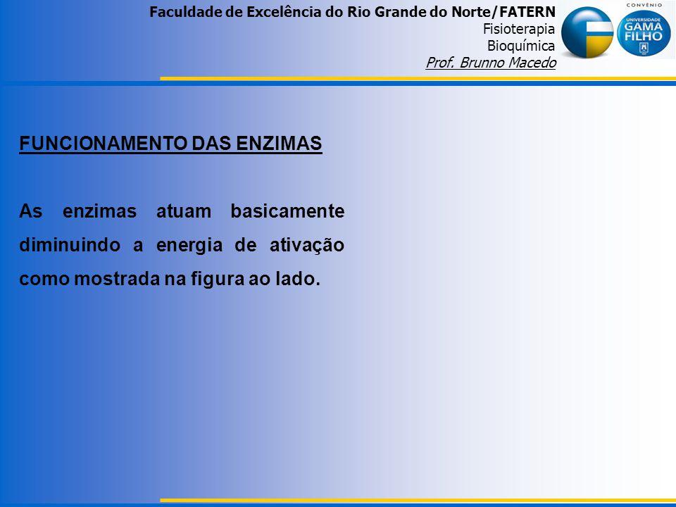 Faculdade de Excelência do Rio Grande do Norte/FATERN Fisioterapia Bioquímica Prof. Brunno Macedo FUNCIONAMENTO DAS ENZIMAS As enzimas atuam basicamen