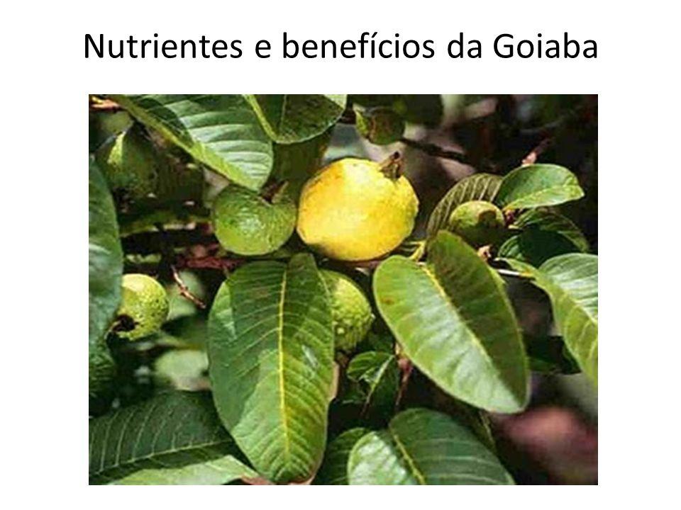 Nutrientes e benefícios da Goiaba