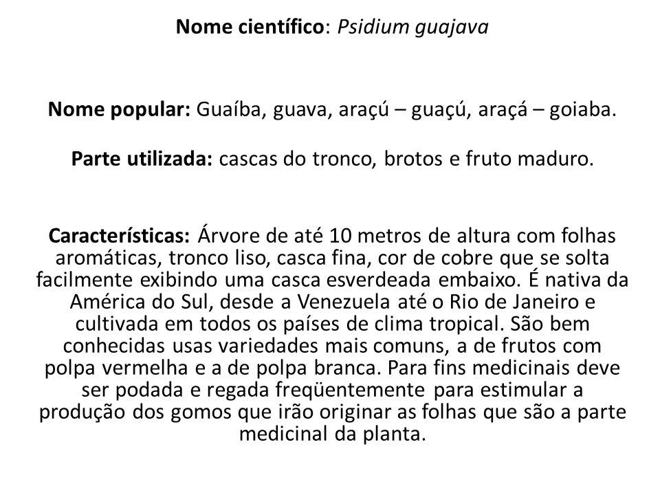 Nome científico: Psidium guajava Nome popular: Guaíba, guava, araçú – guaçú, araçá – goiaba.