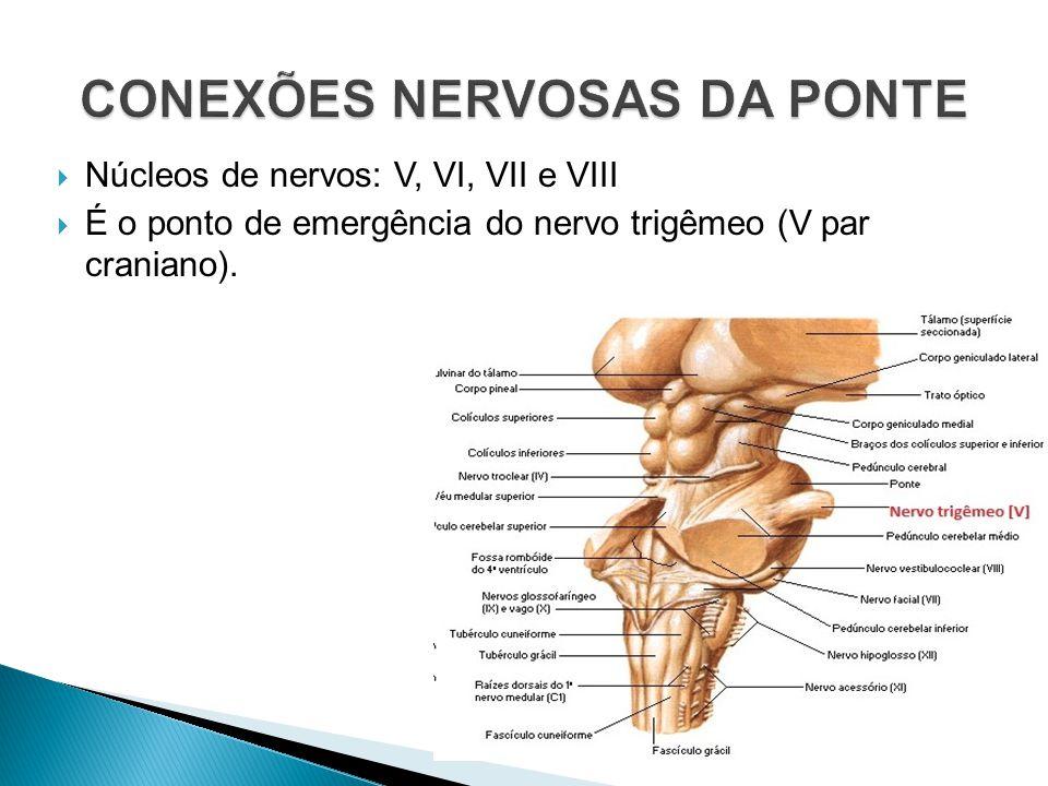 Núcleos de nervos: V, VI, VII e VIII É o ponto de emergência do nervo trigêmeo (V par craniano).