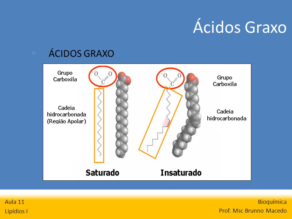 Bioquímica Prof. Msc Brunno Macedo Aula 11 Lipídios I ÁCIDOS GRAXO Ácidos Graxo