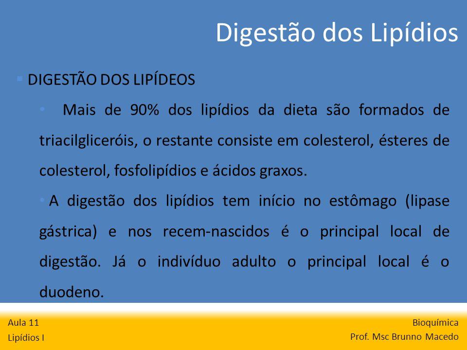 Digestão dos Lipídios Bioquímica Prof.