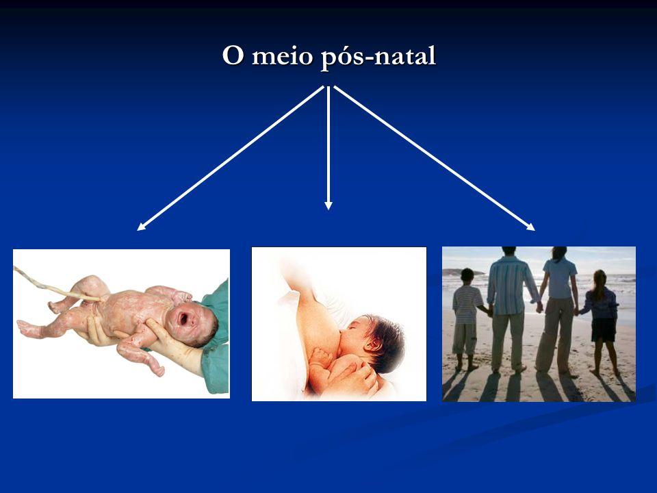 Carga genética Família Escola Faculdade Trabalho Religião Amigos Meio químico pré-natal
