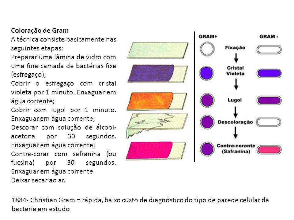 Coloração de Gram A técnica consiste basicamente nas seguintes etapas: Preparar uma lâmina de vidro com uma fina camada de bactérias fixa (esfregaço); Cobrir o esfregaço com cristal violeta por 1 minuto.