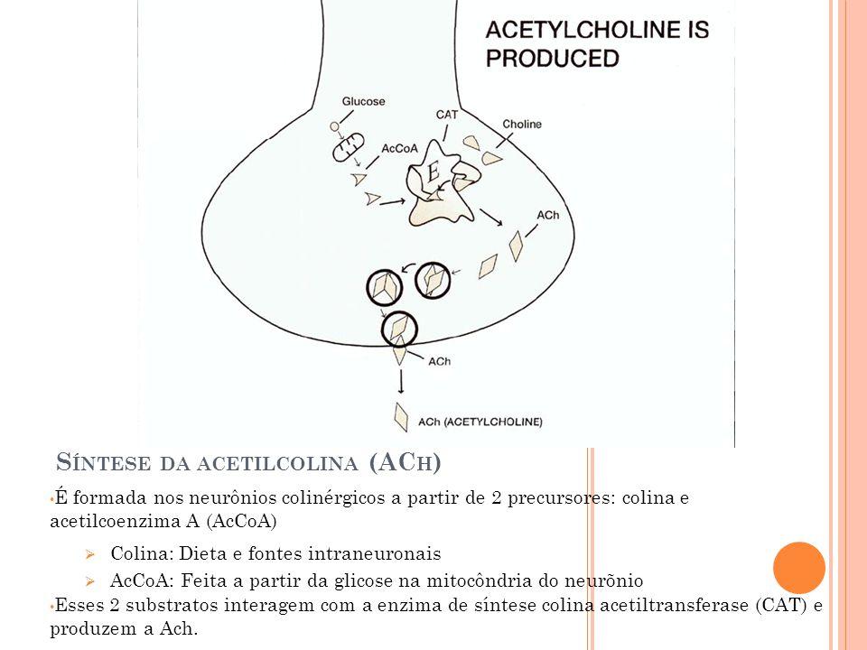 S ÍNTESE DA ACETILCOLINA (AC H ) É formada nos neurônios colinérgicos a partir de 2 precursores: colina e acetilcoenzima A (AcCoA) Colina: Dieta e fontes intraneuronais AcCoA: Feita a partir da glicose na mitocôndria do neurõnio Esses 2 substratos interagem com a enzima de síntese colina acetiltransferase (CAT) e produzem a Ach.