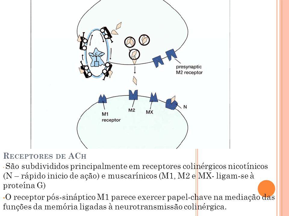 R ECEPTORES DE AC H São subdivididos principalmente em receptores colinérgicos nicotínicos (N – rápido inicio de ação) e muscarínicos (M1, M2 e MX- ligam-se à proteína G) O receptor pós-sináptico M1 parece exercer papel-chave na mediação das funções da memória ligadas à neurotransmissão colinérgica.