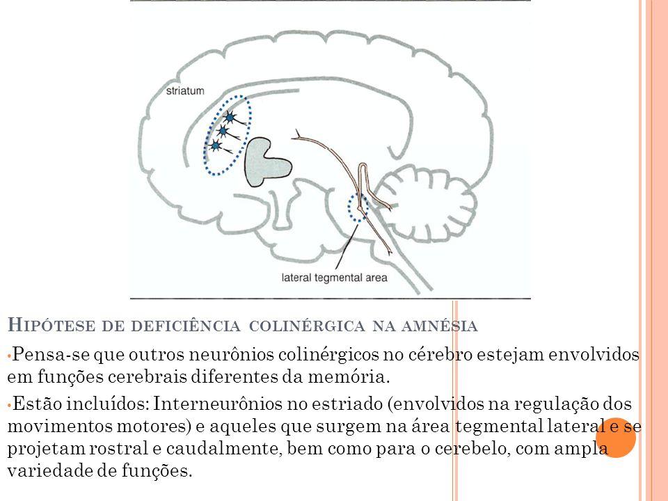 Pensa-se que outros neurônios colinérgicos no cérebro estejam envolvidos em funções cerebrais diferentes da memória. Estão incluídos: Interneurônios n