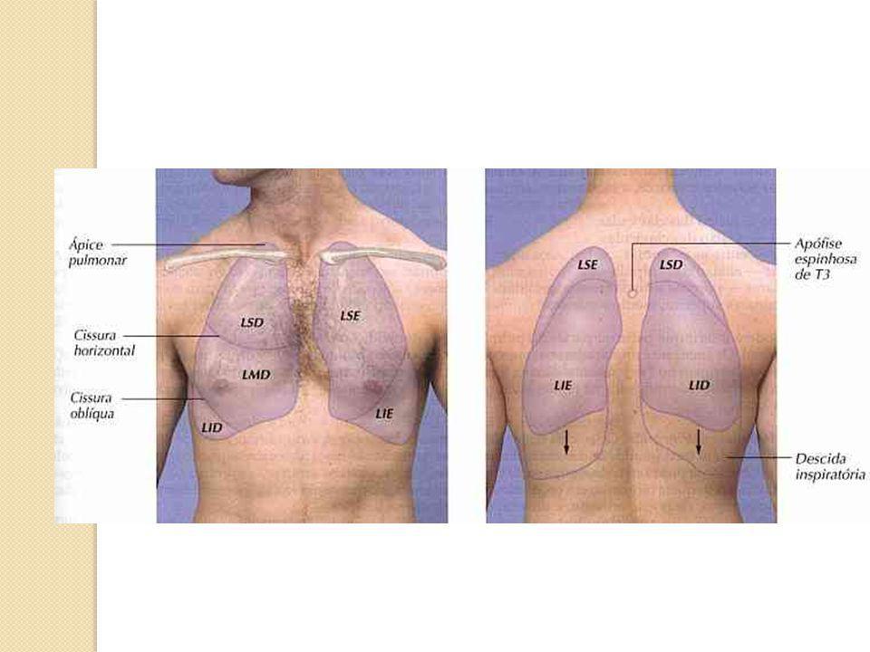 Ausculta Pulmonar Ruídos fisiológicos: Murmúrio vesicular Ruído traqueal Ruídos adventícios: Contínuos Ronco, sibilo, estridor Descontínuos Estertores crepitantes e bolhosos