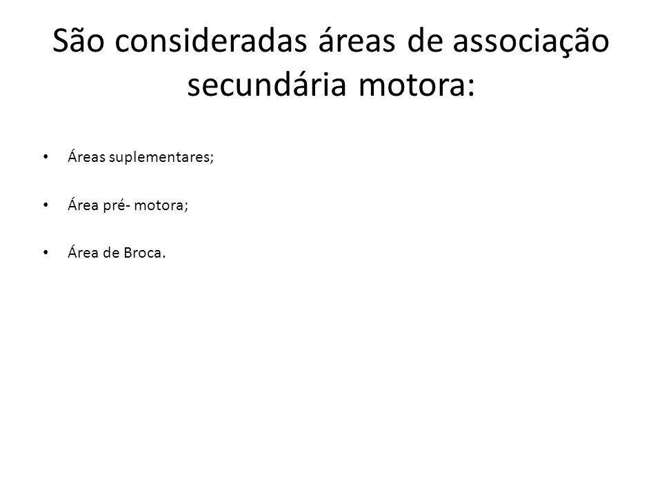São consideradas áreas de associação secundária motora: Áreas suplementares; Área pré- motora; Área de Broca.