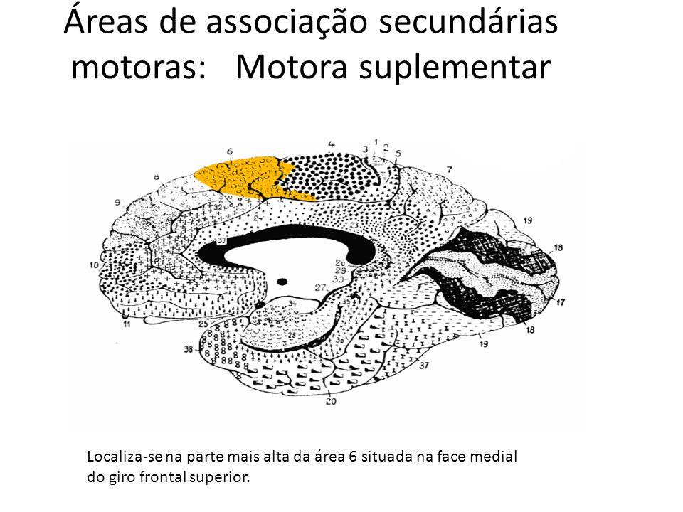 Áreas de associação secundárias motoras: Motora suplementar Localiza-se na parte mais alta da área 6 situada na face medial do giro frontal superior.