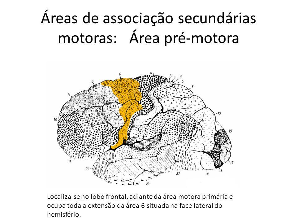 Áreas de associação secundárias motoras: Área pré-motora Localiza-se no lobo frontal, adiante da área motora primária e ocupa toda a extensão da área