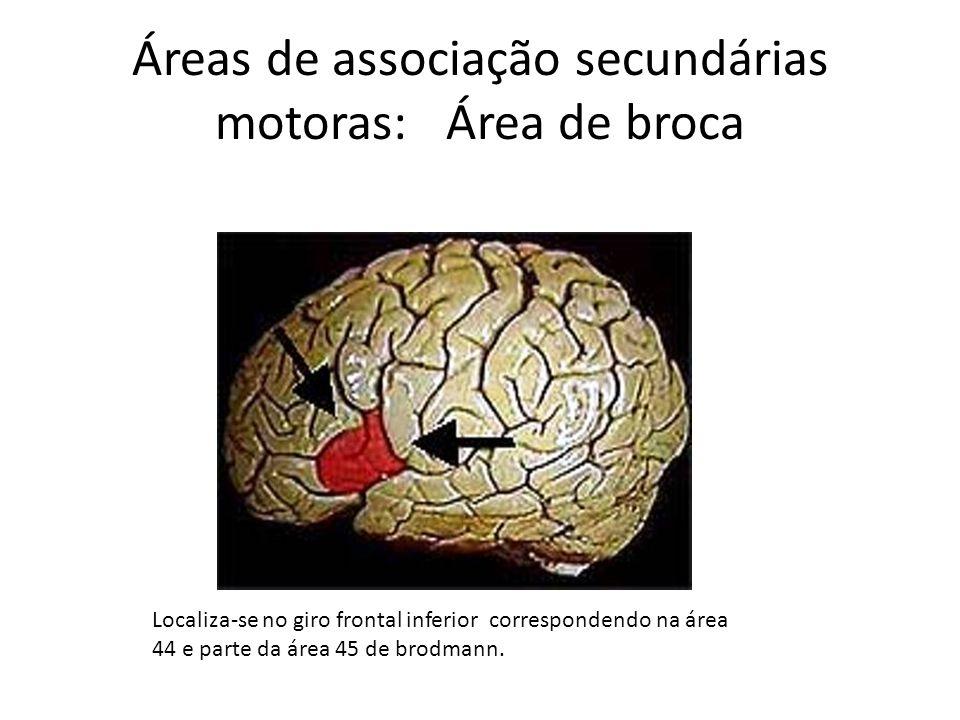 Áreas de associação secundárias motoras: Área de broca Localiza-se no giro frontal inferior correspondendo na área 44 e parte da área 45 de brodmann.