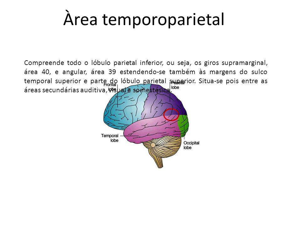 Àrea temporoparietal Compreende todo o lóbulo parietal inferior, ou seja, os giros supramarginal, área 40, e angular, área 39 estendendo-se também às