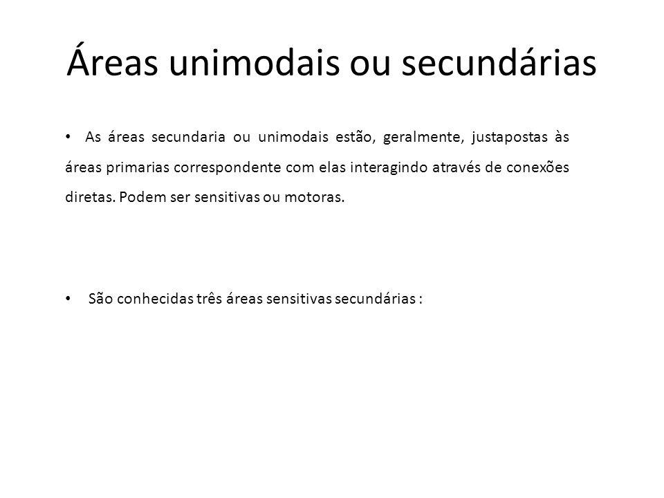 Áreas unimodais ou secundárias As áreas secundaria ou unimodais estão, geralmente, justapostas às áreas primarias correspondente com elas interagindo