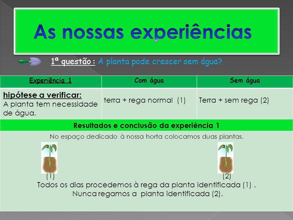 Experiência 1Com águaSem água hipótese a verificar: A planta tem necessidade de água. terra + rega normal (1) Terra + sem rega (2) Resultados e conclu