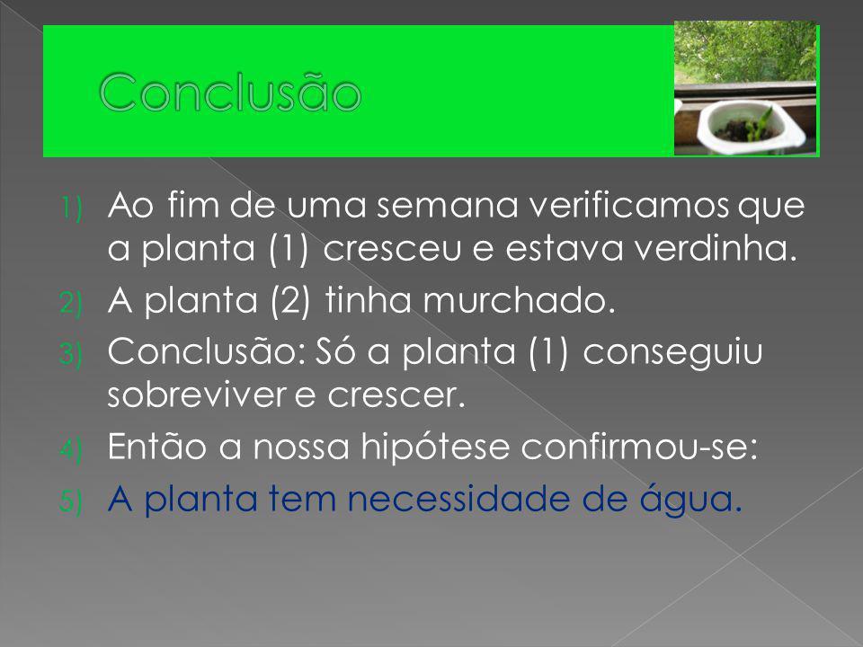 1) Ao fim de uma semana verificamos que a planta (1) cresceu e estava verdinha. 2) A planta (2) tinha murchado. 3) Conclusão: Só a planta (1) consegui