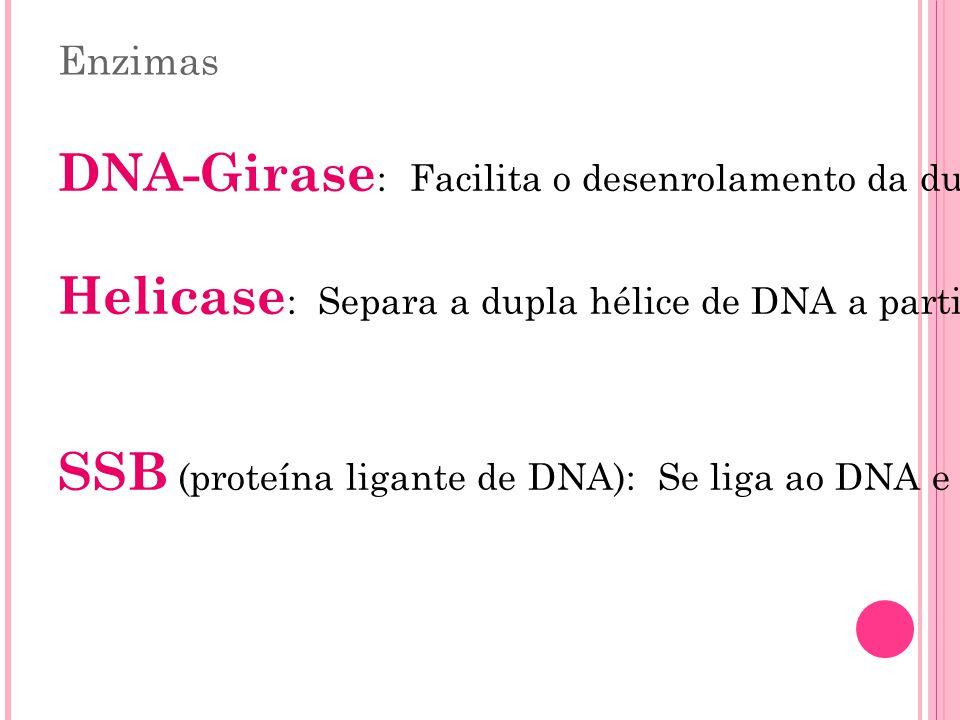 Enzimas DNA-Girase : Facilita o desenrolamento da dupla hélice. Helicase : Separa a dupla hélice de DNA a partir da forquilha de replicação. SSB (prot
