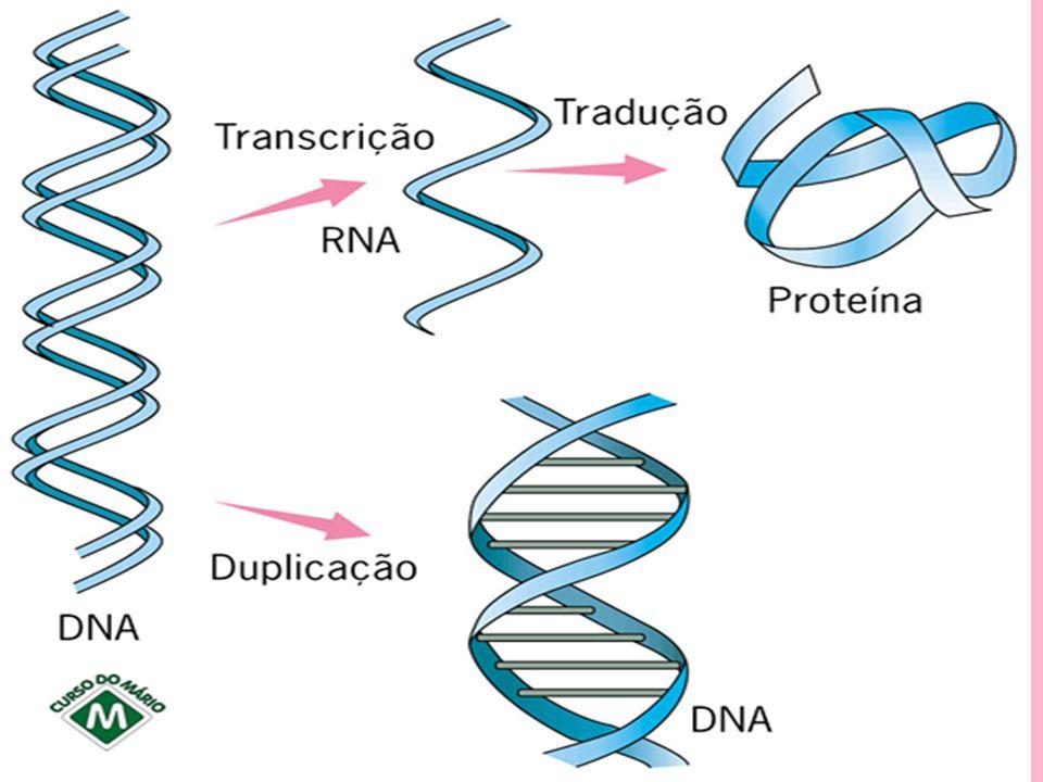 Replicação do DNA O DNA tem capacidade de se auto-duplicar, processo que recebe o nome de REPLICAÇÃO ou DUPLICAÇÃO.