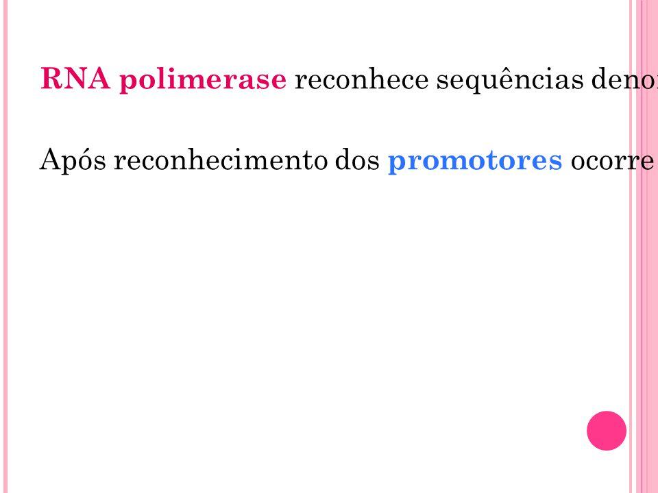 RNA polimerase reconhece sequências denominadas promotores (sequências de nucleotídeos localizadas imediatamente antes de um gene) Após reconhecimento
