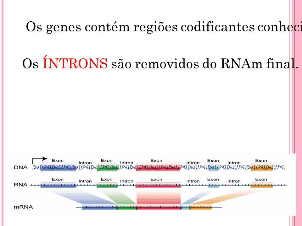Os genes contém regiões codificantes conhecidas como ÉXONS, que são expressos, com seqüências intercalares conhecidas como ÍNTRONS, que não são expres