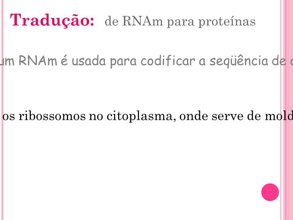 Tradução: de RNAm para proteínas Processo pelo qual a seqüência de bases de um RNAm é usada para codificar a seqüência de aminoácidos que formará uma