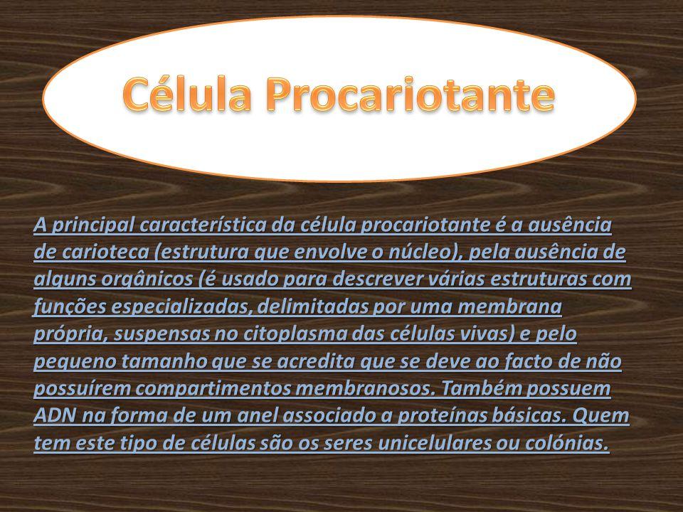 A principal característica da célula procariotante é a ausência de carioteca (estrutura que envolve o núcleo), pela ausência de alguns orgânicos (é us