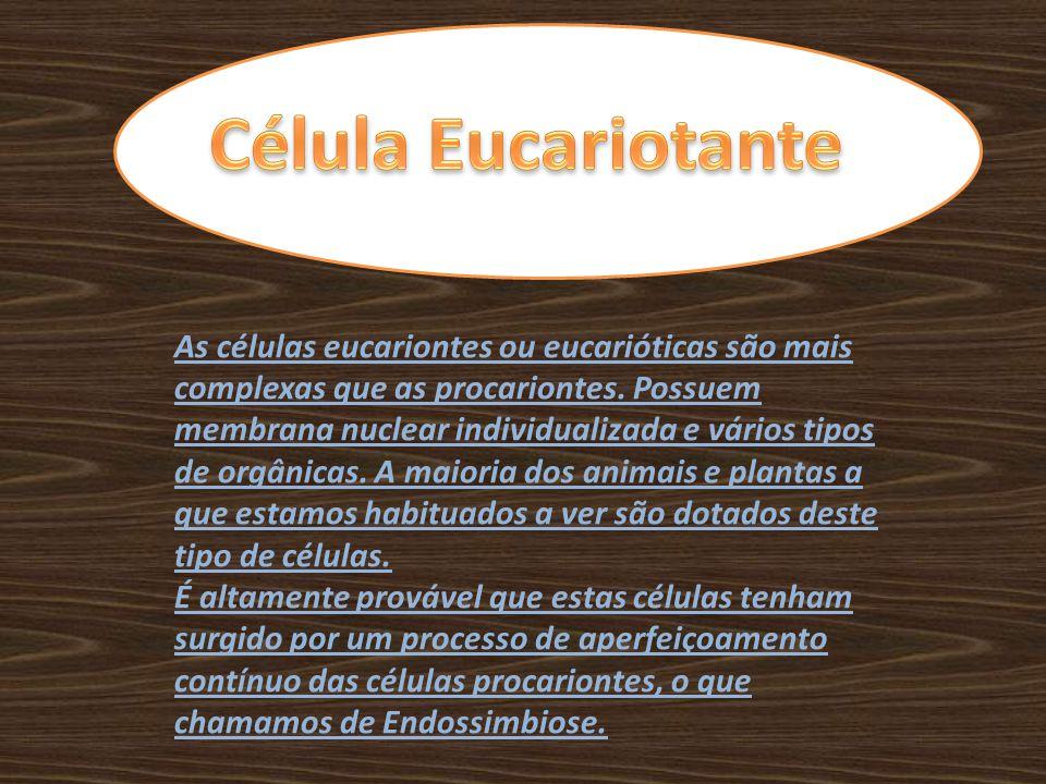 As células eucariontes ou eucarióticas são mais complexas que as procariontes. Possuem membrana nuclear individualizada e vários tipos de orgânicas. A
