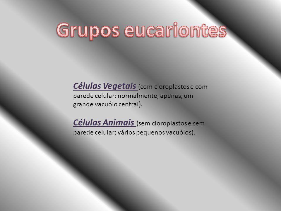 Células Vegetais (com cloroplastos e com parede celular; normalmente, apenas, um grande vacuólo central). Células Animais (sem cloroplastos e sem pare