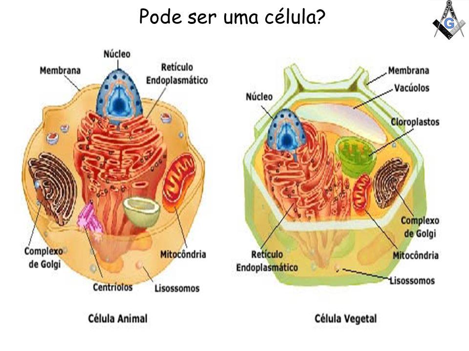Pode ser uma célula?